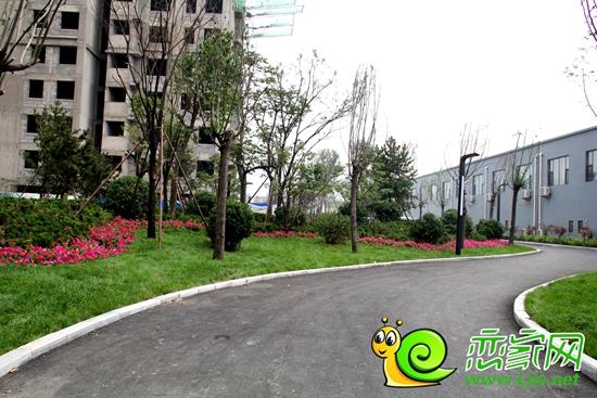 一,最大化开放地面的绿化空间 二,增添多株景观大树的同时,在建筑与