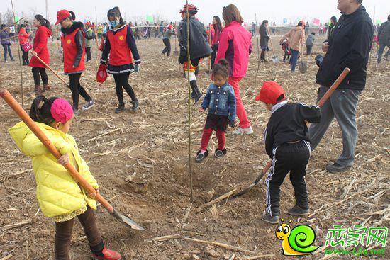 第二届大型公益植树节活动完美收官
