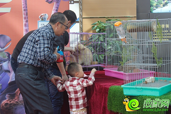 邯郸恒大名都现实版《疯狂动物城》欢乐来袭
